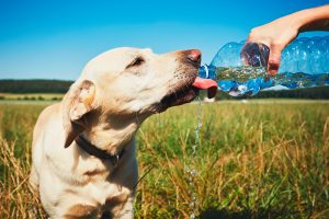 water for dogs